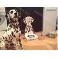 Стильные миски на подставках для собак и кошек. БЕЗ ПОСРЕДНИКОВ И НАЦЕНОК,возможно имя любимца, предусмотрена возможность крепления к полу и к стене,(регулировка по высоте). ПОДАРОК ПРИ ЗАКАЗЕ !!!